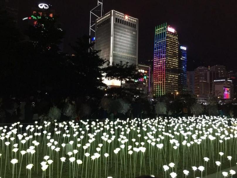 У Гонконзі запалили 25 тис білих троянд - фото 8