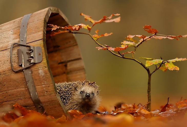 20 причин, за якими осінь набагато краще літа - фото 14