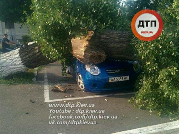 У Києві дерево розтрощило автомобіль - фото 1