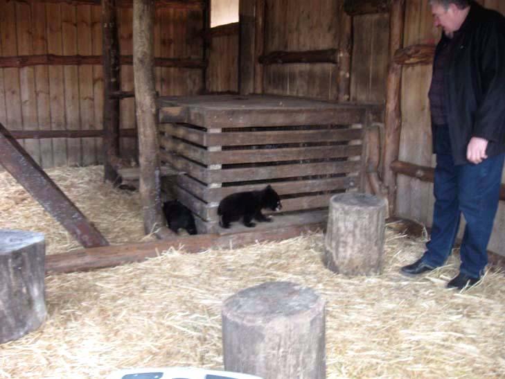 Тваринний світ бердянського зоопарку поповнили тигр, ведмеді та мавпеня - фото 9