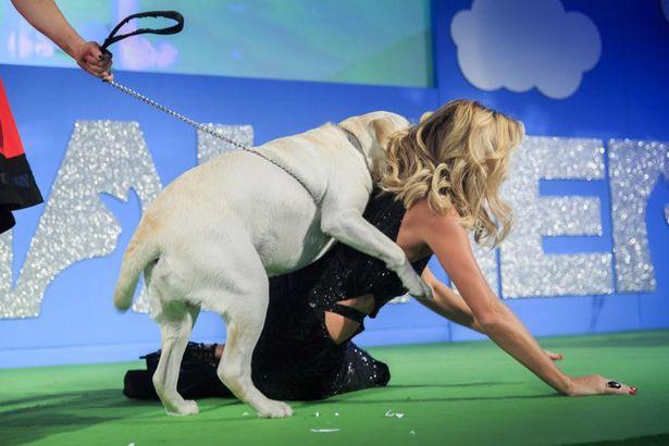 Як собака осідлав акторку на сцені - фото 1