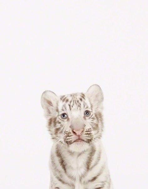 Як би виглядали дикі тварини на фото у паспорті - фото 6