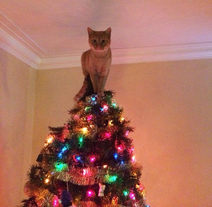Пухнастики, які оголосили «війну» Новому року та Різдву - фото 14