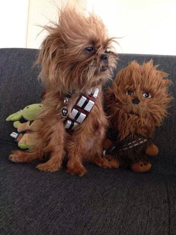 Зоряні війни: як виглядають мімішні тварини в костюмах героїв саги - фото 4