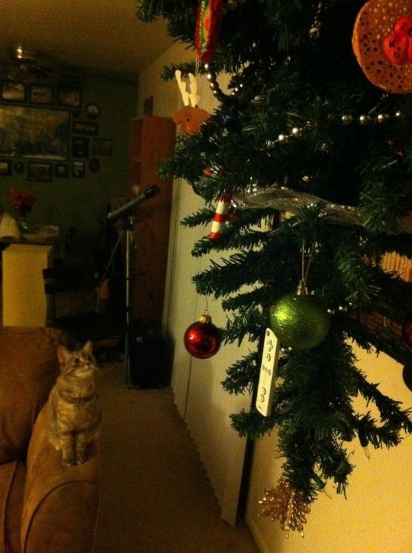 кіт і ялинка
