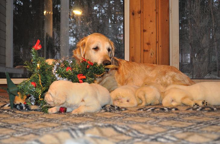 Пухнастики, які оголосили «війну» Новому року та Різдву - фото 1
