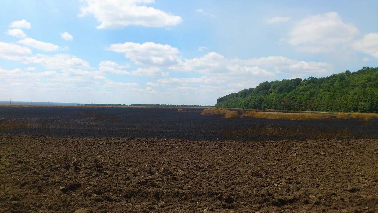 На Вінниччині на полях Порошенка згоріло 5 гектарів пшениці - фото 2