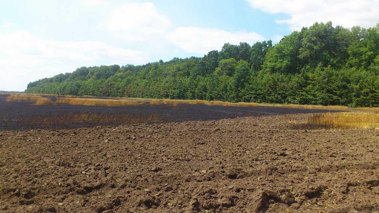 На Вінниччині на полях Порошенка згоріло 5 гектарів пшениці - фото 1