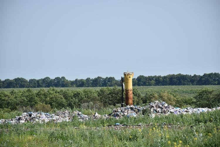 Лелеки звили гніздо на вінницькому сміттєзвалищі - фото 2