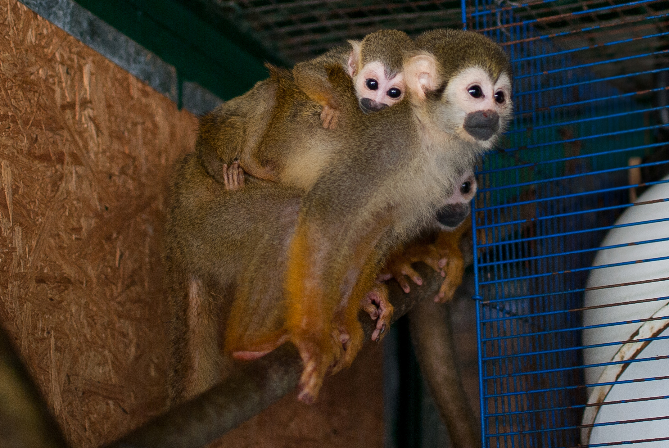 У харківському екопарку – мавпяче поповнення  - фото 1