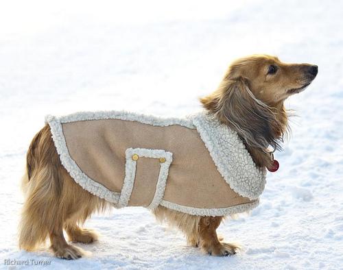 Как сделать костюм для собаки из шарфа