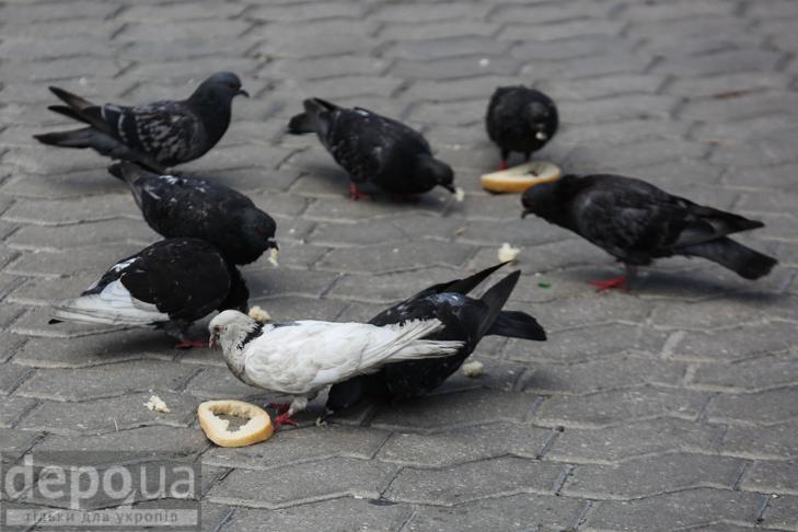 15 фотографій про те, що Київ неможливий без вуличної їжі - фото 9