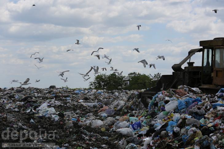 Табір йде… у Підгірці: як роми захопили головне сміттєзвалище Києва - фото 11