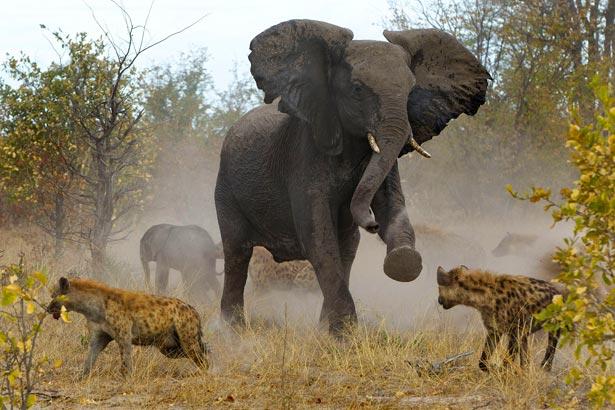 День слона (ФОТО) - фото 10
