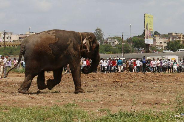 Цирковий слон вирвався на волю і спричинив паніку в індійському місті - фото 3