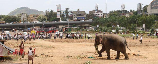 Цирковий слон вирвався на волю і спричинив паніку в індійському місті - фото 1