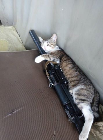 За що котам в АТО треба поставити пам'ятник-8 - фото 6