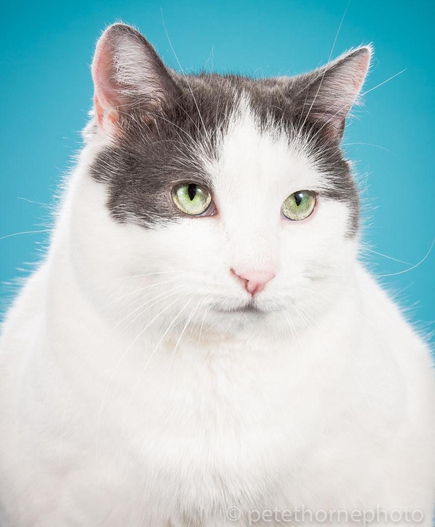 ТОП-7 котів, яким час сідати на дієту - фото 5