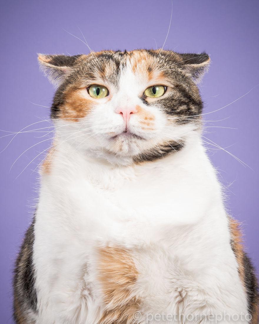 ТОП-7 котів, яким час сідати на дієту - фото 2