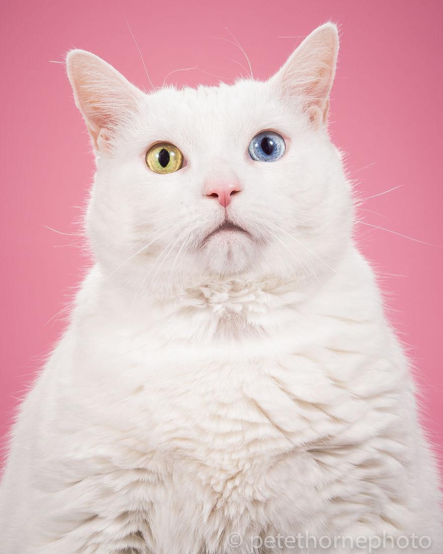 ТОП-7 котів, яким час сідати на дієту - фото 1