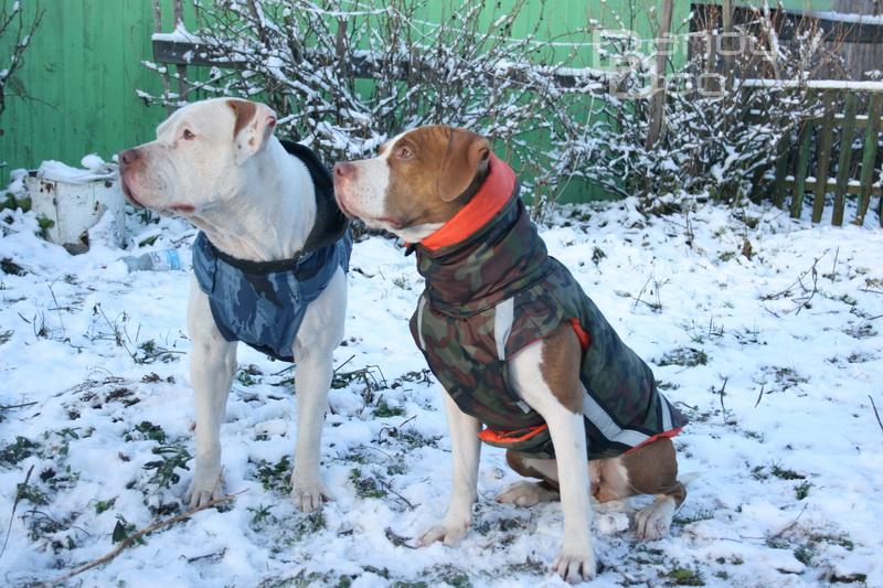 Холод собачий: ТОП-20 собак у зимовому одязі - фото 11