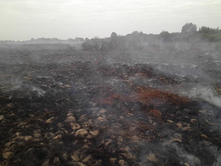 Ліквідація пожежі на Деражнянщині триває  - фото 5