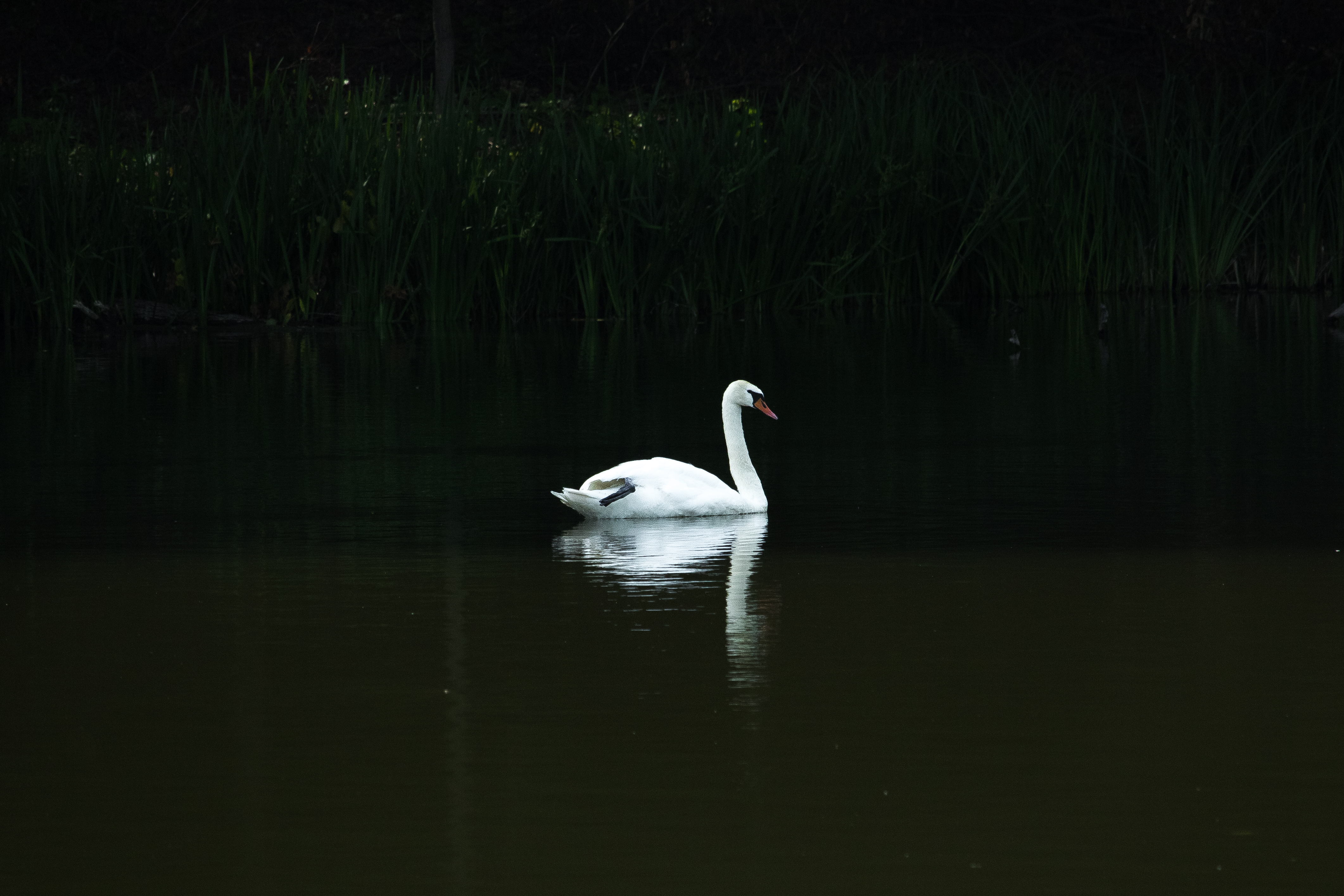 Харків отримав власне Лебедине озеро - фото 1