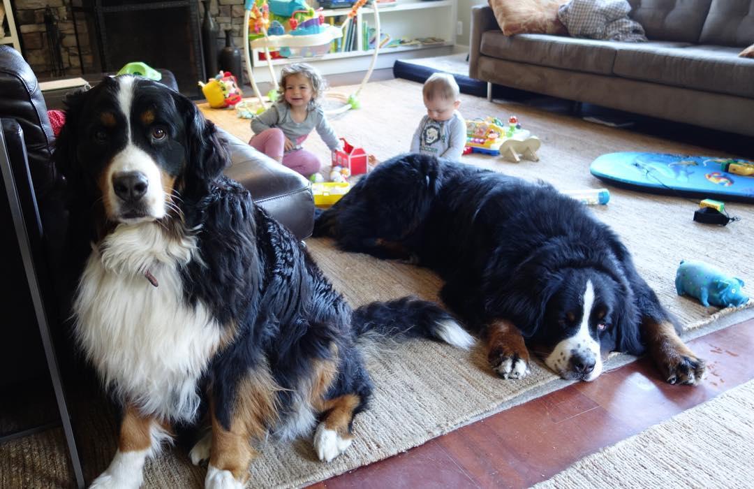 Неймовірна дружба малюків та величезних собак розчулила мережу