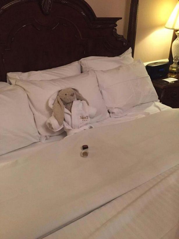 Як готель в Ірландії зробив собі рекламу, лікуючи та годуючи м'яку іграшку  - фото 3
