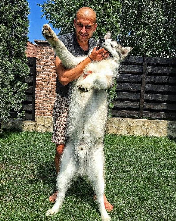 Ракицький показав нове фото з собакою - фото 1