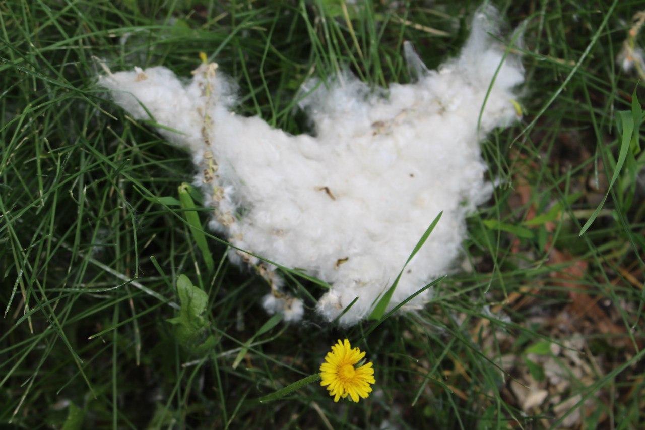 Чхайте на здоров'я: Чому миколаївцям не так просто позбутися сезонної алергії