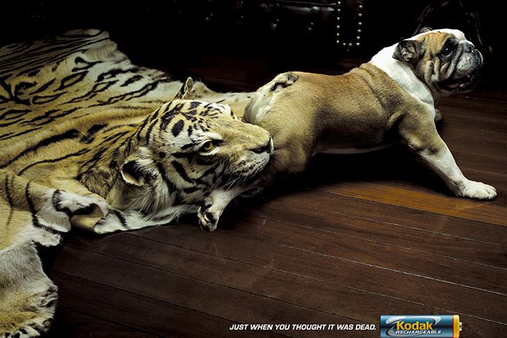 Може, пора переводити собаку на Pedigree Light? - фото 34