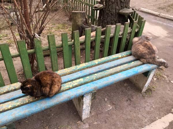 Вінничанка голодує у підвалі з котами  - фото 2