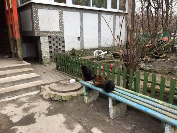 Вінничанка голодує у підвалі з котами  - фото 1