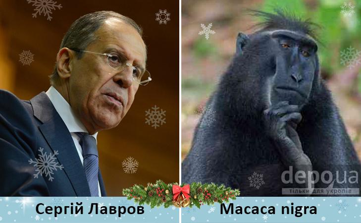 Політики та мавпи - фото 11