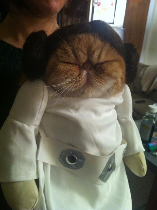 Зоряні війни: як виглядають мімішні тварини в костюмах героїв саги - фото 3