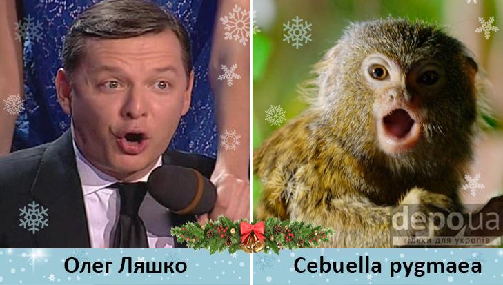 Політики та мавпи - фото 2