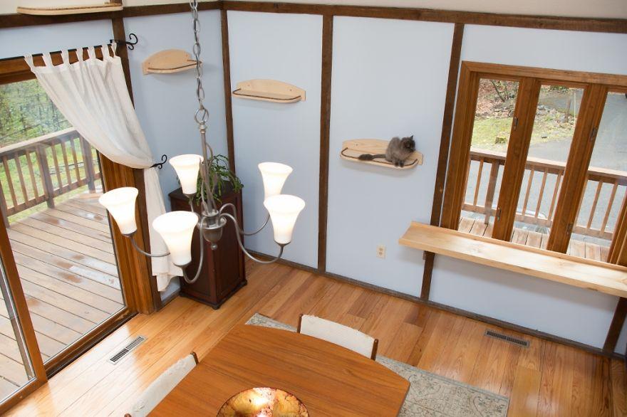 Як британки переробили свій будинок для комфорту котів  - фото 3