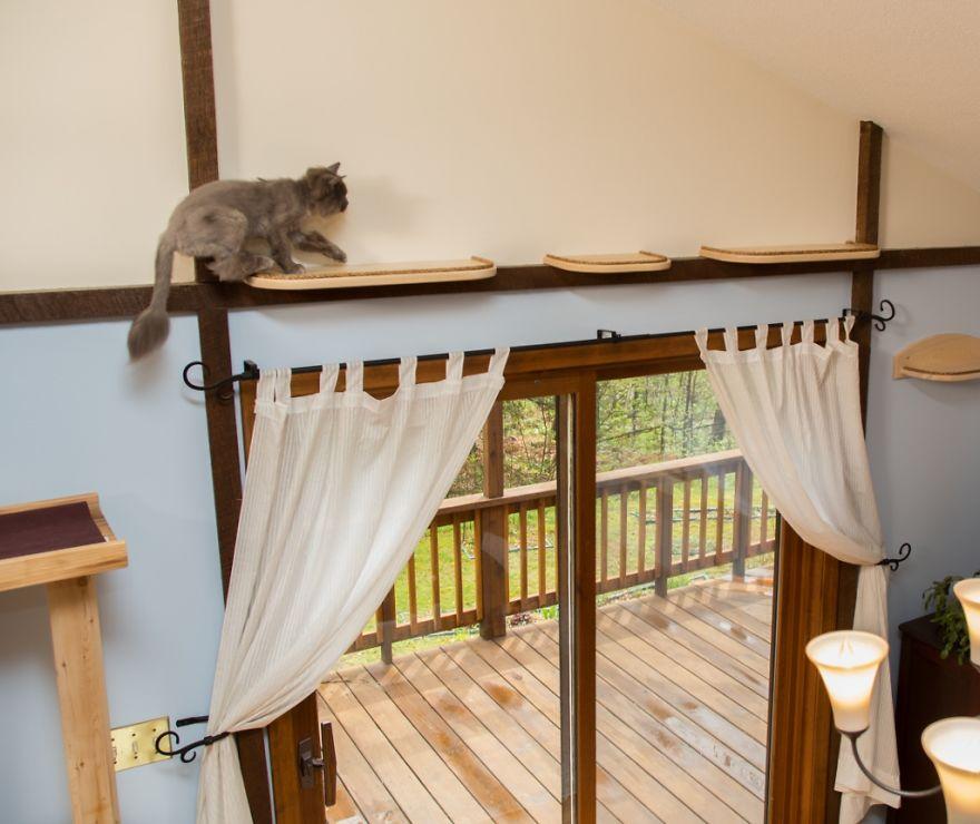 Як британки переробили свій будинок для комфорту котів  - фото 4