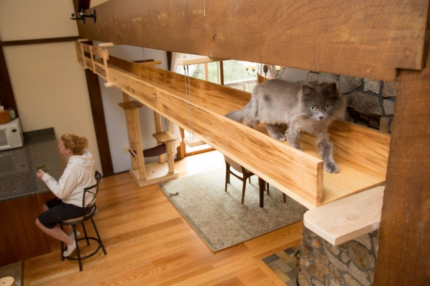 Як британки переробили свій будинок для комфорту котів  - фото 6