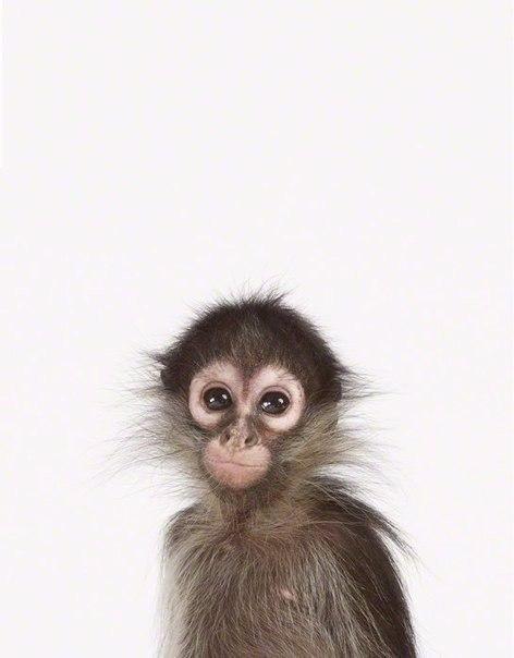 Як би виглядали дикі тварини на фото у паспорті - фото 5