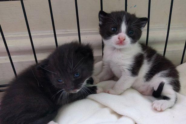 Як кішка і чотири котеняти у сушарці оселилися - фото 3