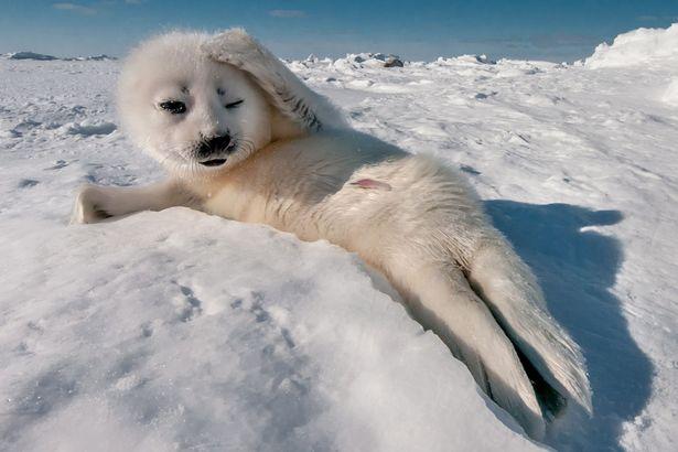 Як новонароджені морські котики працювали моделями - фото 1
