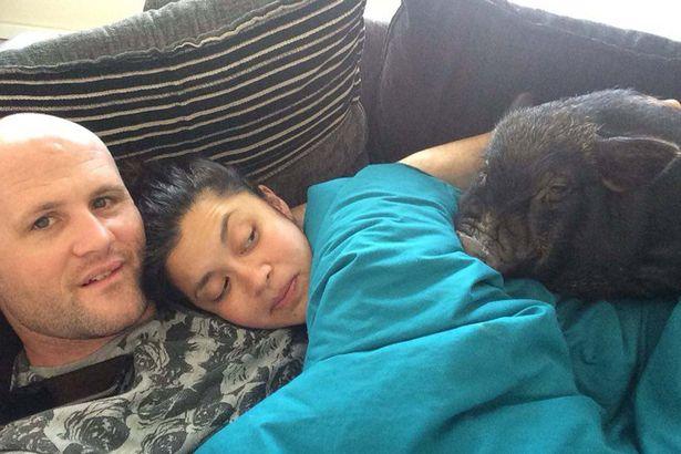 Як симпатичне порося ділить ліжко з господарями - фото 4