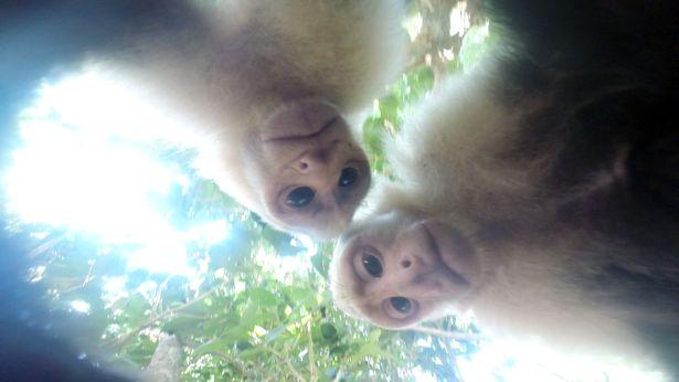 Як мавпа фотосесію зробила - фото 2
