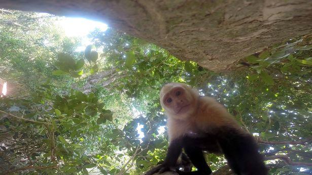 Як мавпа фотосесію зробила - фото 1