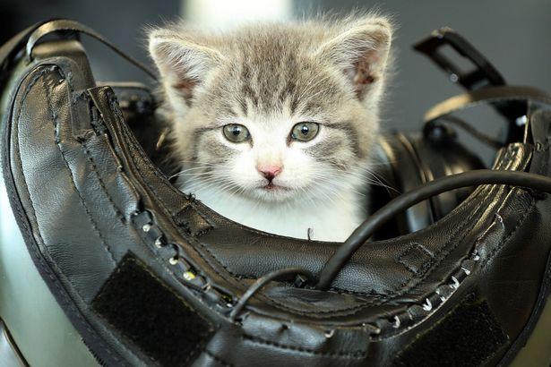 Крихітне кошеня подолало 500 км, заховавшись під бампером - фото 1
