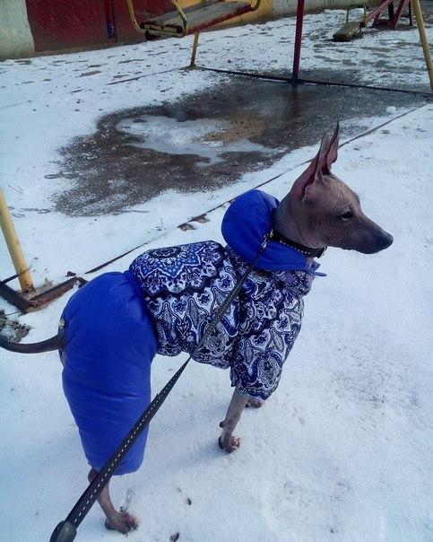 Холод собачий: ТОП-20 собак у зимовому одязі - фото 16