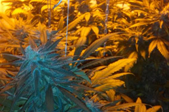 На Луганщині зловили диверсанта-наркоділка - фото 3