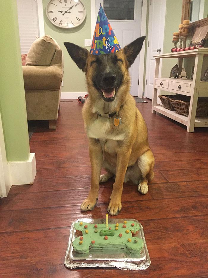 ТОП-13 тварин-іменинників, які святкують день народження веселіше за тебе - фото 11